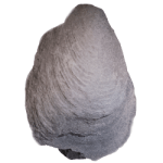 corallidomus versaillensis 250 white