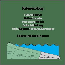 C.inflatum_paleoeco