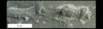 Palaeophycus_800px