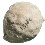 paleschara 250 white