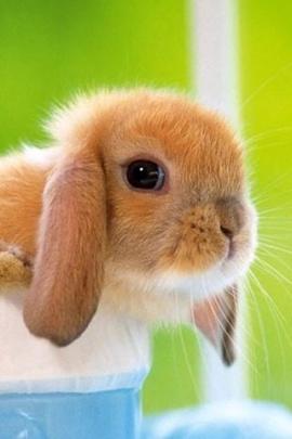 iPhone Wallpaper Pasqua: Coniglio
