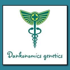 DANKONOMICS