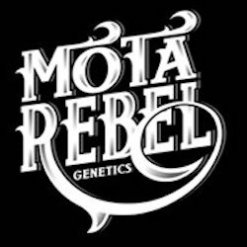MOTA REBEL GENETICS