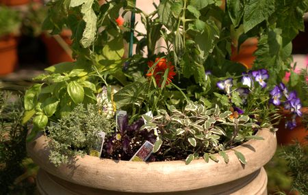how to grow vegetables on a balcony