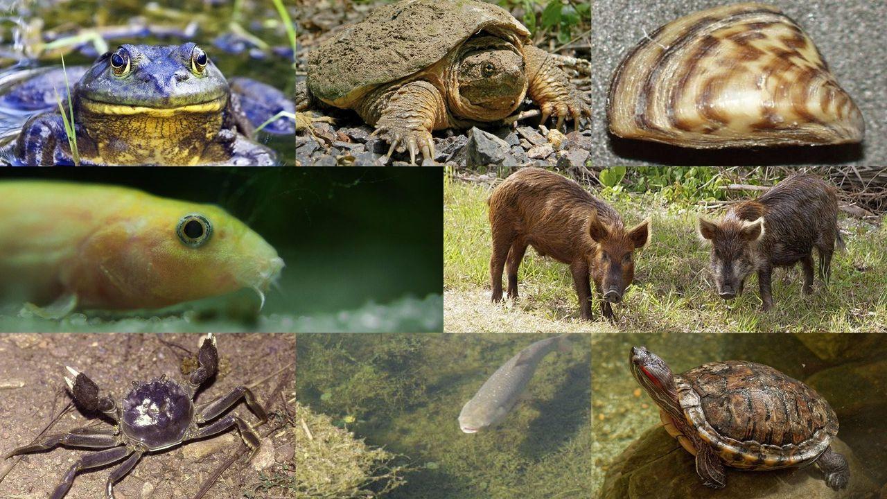 Meet the 11 invasive species wreaking havoc on Oregon's