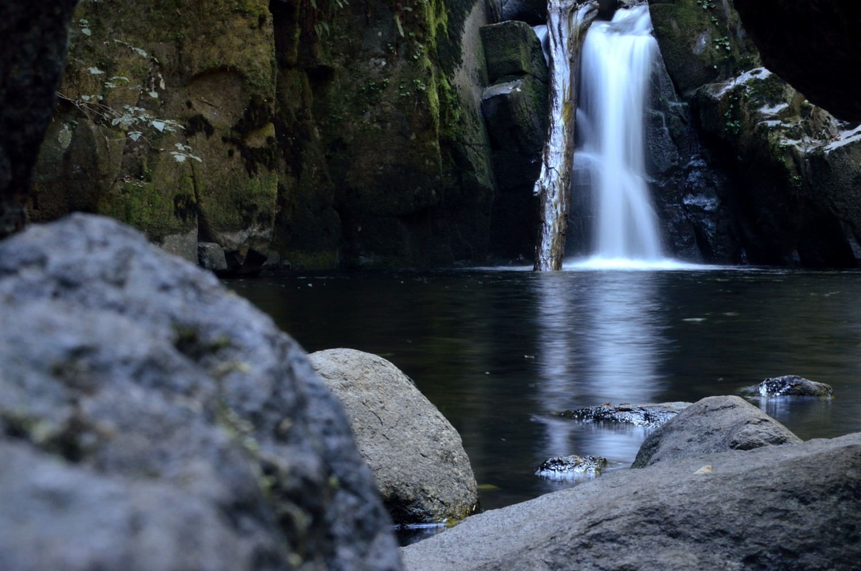 Sweet Creek Falls Hike  Oregon Wild
