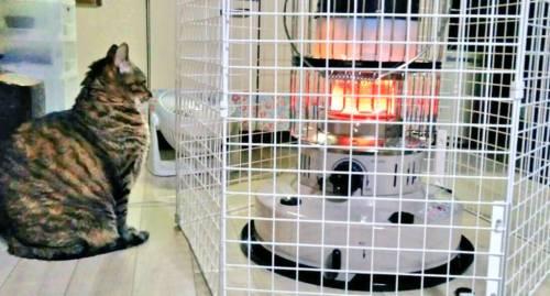 ストーブガードと猫
