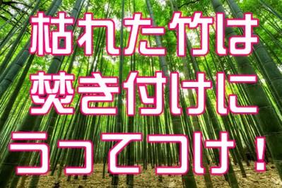 枯れた竹は焚き付けにうってつけ