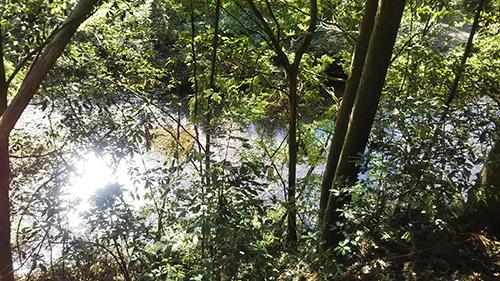 モミの木キャンプ場の自然