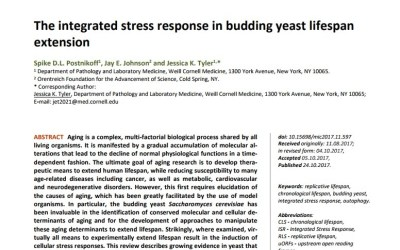 The integrated stress response in budding yeast lifespan extension