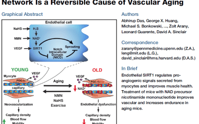 Researchers Find Reversible Cause of Vascular Aging