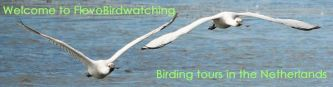 Flevo Birdwatching