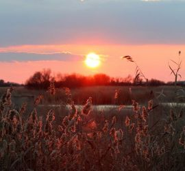 The Tablas of Daimiel at sunset