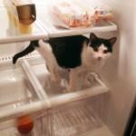 3 Tricks to Organizing a New Kitchen