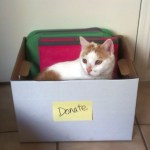 Organizing with Cats