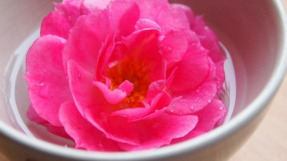Organic Rose Water spray DIY recipe