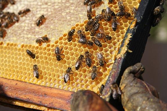 raw honey for seasonal allergies
