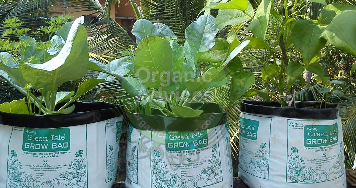 filling grow bags for organic farming - step by step methods