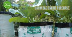 Grow Bag Online Purchase