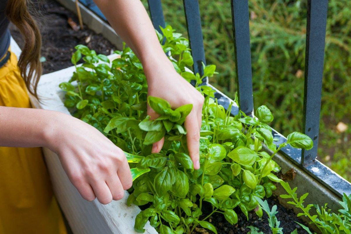Apartment Vegetable Garden