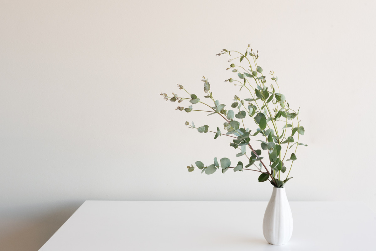 Fall Leaves Wallpaper Free 5 Eucalyptus Decorating Ideas For Your Healthy Home