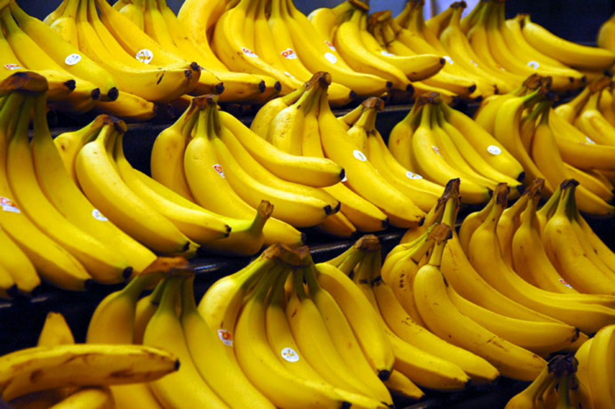 Bananas are the McDonalds of Fruit and Theyre Destroying