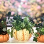 Diy Mini Pumpkin Succulent Gardens Organic Authority