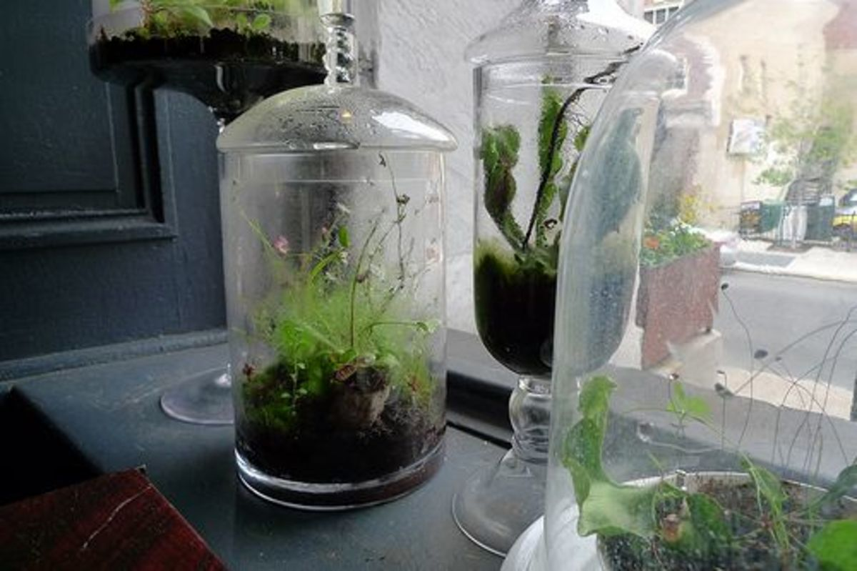 From Old Jar to Lush Microcosm How to Make A Terrarium