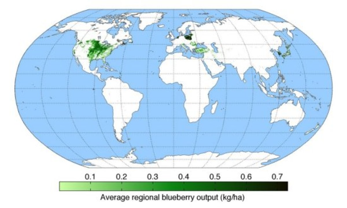 growing blueberries map
