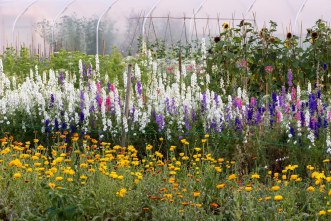 The field of cutting flowers at Organic Blooms,