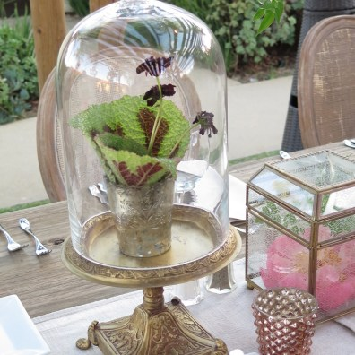 Bell Jars and Cloches