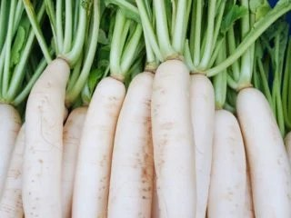 11 Surprising Benefits of Daikon Organic Facts