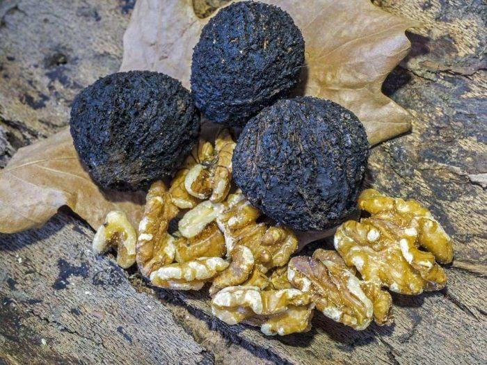 7 Amazing Benefits of Black Walnut Organic Facts