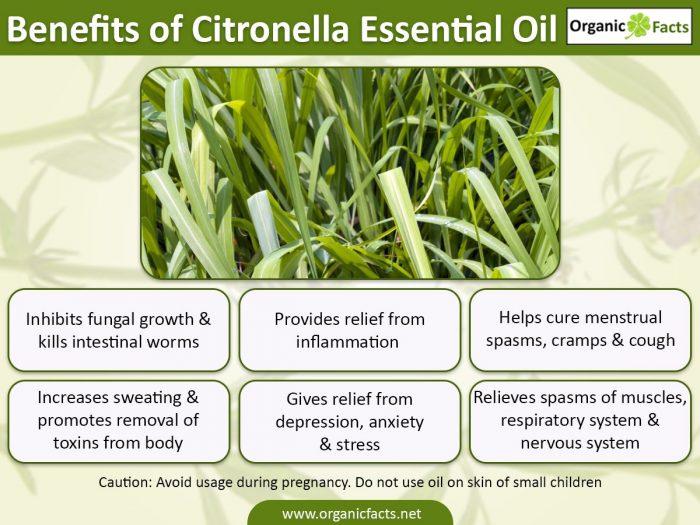 15 Incredible Benefits of Citronella Essential Oil ...