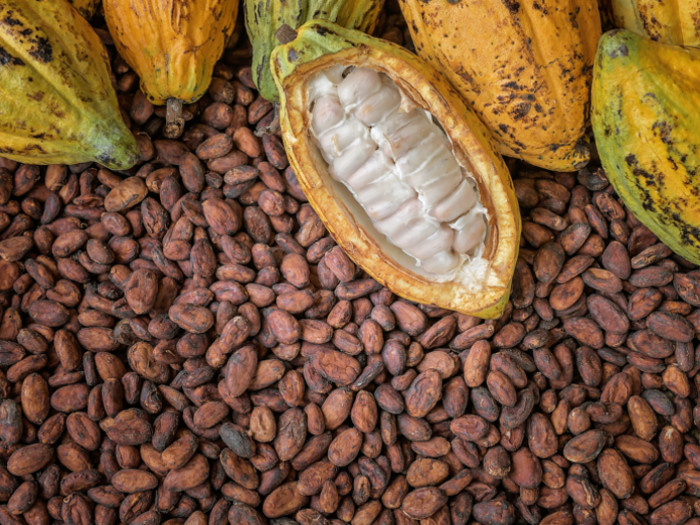 Image result for cocoa