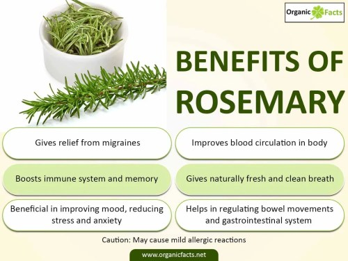 small resolution of health benefits of rosemary