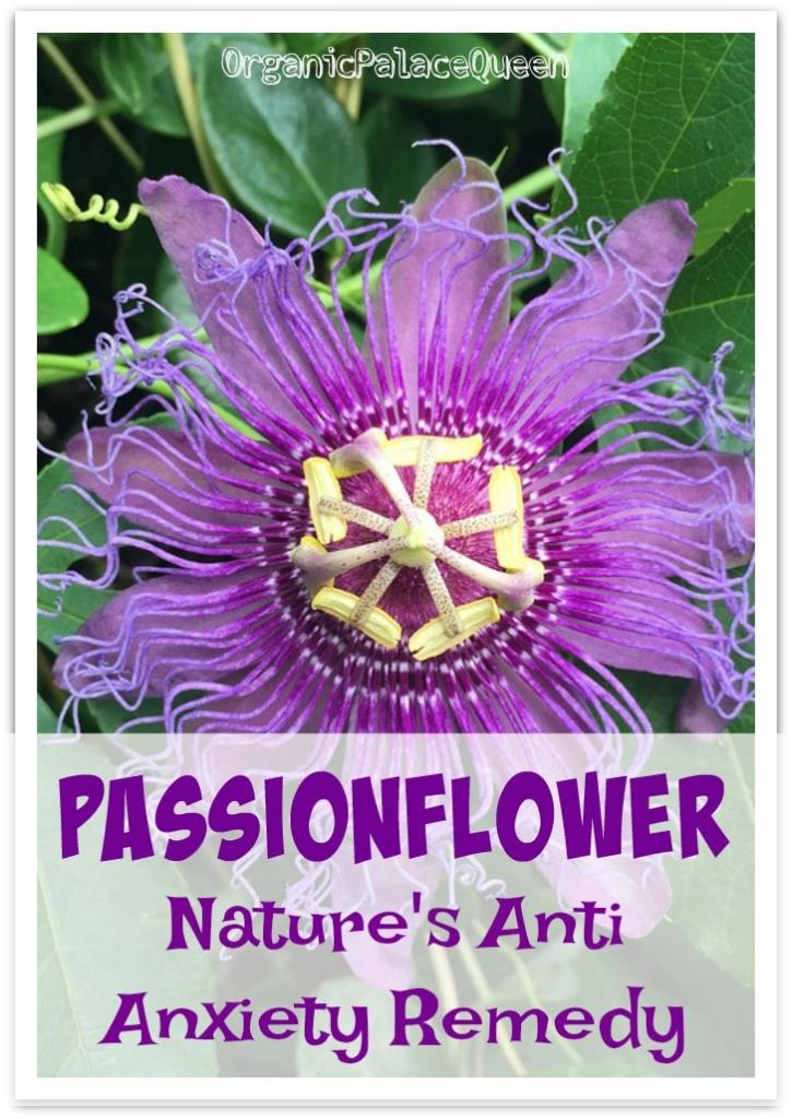 Does Passionflower reduce anxiety