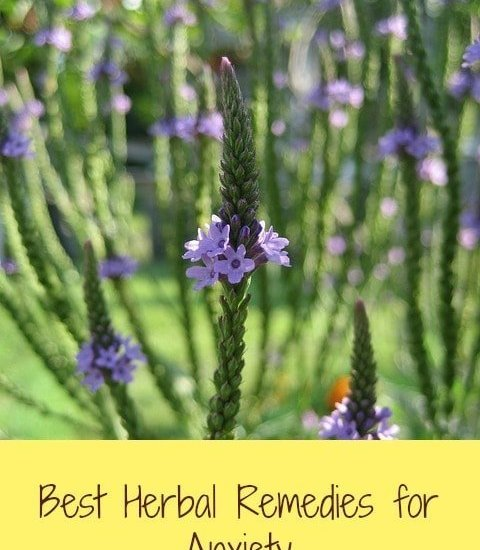 herbs that help anxiety