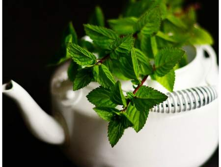 peppermint oil for pain