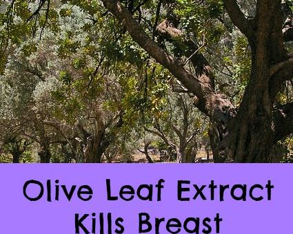 olive leaf for breast cancer