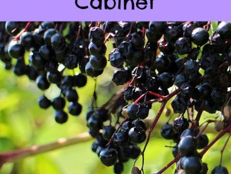 Where can you buy elderberry syrup