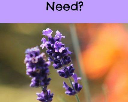 Vitacost lavender oil