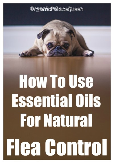 Killing fleas on dogs with essential oils