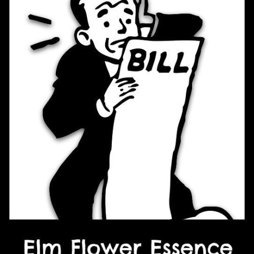 elm flower essence benefits