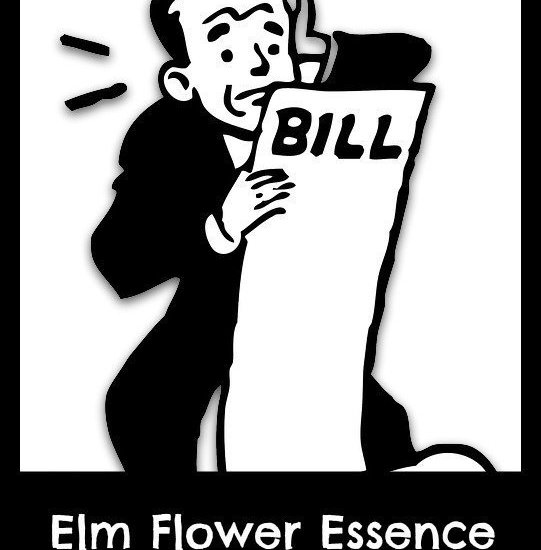 elm flower essence benefits