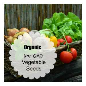 where to buy organic vegetable seeds