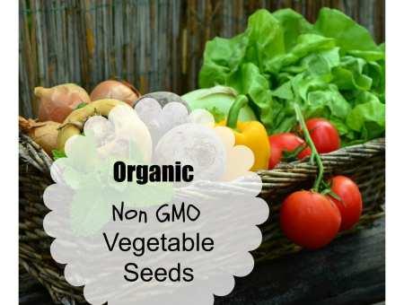 where to buy organic vegetable seeds