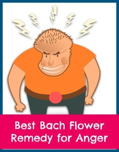 best Bach flower remedy for anger