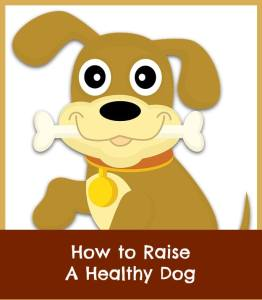 how to raise a healthy dog