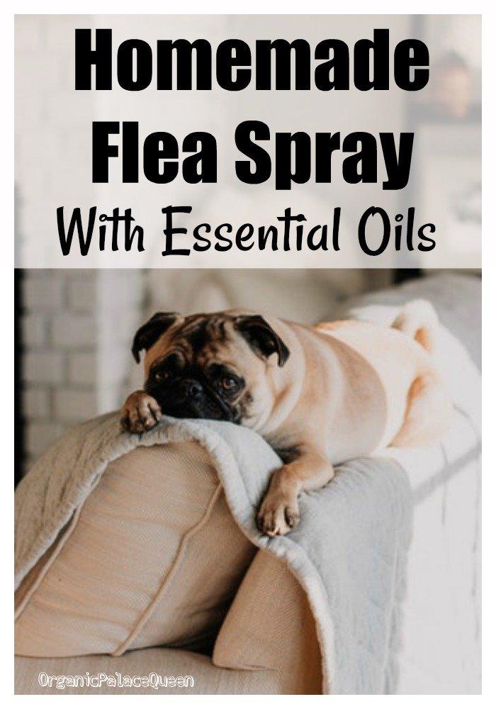 Homemade flea spray with essential oils